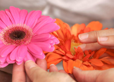 Two sets of hands touch some spring flowers.